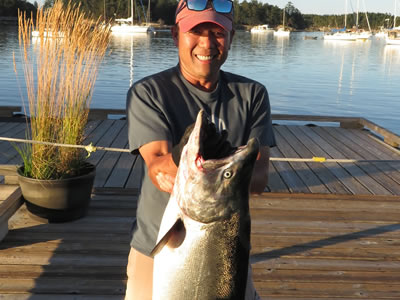 31 pound Tyee from Thrasher.